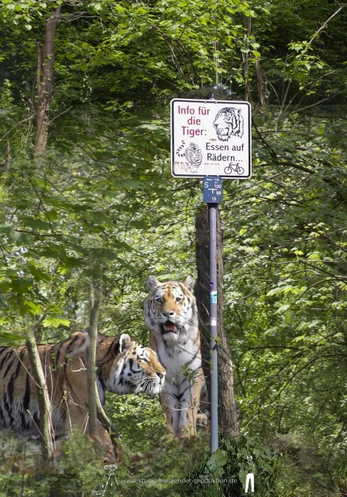 Tiger-Essen auf Rädern